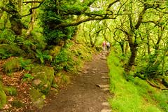 Padley Gorge (DRWeaver) Tags: woodland trees summer landscape nature nationaltrust derbyshire outdoors peakdistrict longshaw padleygorge derbyshiredalesdistrict england unitedkingdom gb