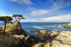 Lone Cypress@17 Mile Drive (Yang Yu's Album) Tags: california 17miledrive 十七英里 索尼 加州 一号公路 ca cahighway1 monterey 蒙特瑞 lonecypress delmonteforest unitedstates us