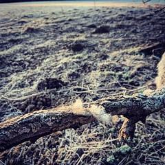 Today's dog walk was a bit frosty (Kol Tregaskes) Tags: koltphotography photo photography photooftheday pic picoftheday picture pictureoftheday