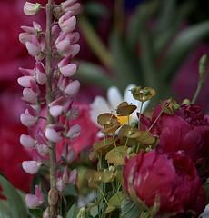 Arranged Flowers (Scott 97006) Tags: flowers bouquet pretty colorful reds