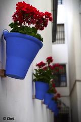 Perspectiva Floral (chelocatala) Tags: primavera flores geranio maceta