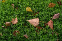 Reclining & Relaxing Leaves (paulypaulpaul1) Tags: smcpentaxm50mmf17 f55