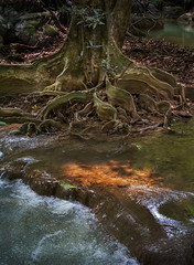 Smooth flow in rain forest (2MilkyWay) Tags: nature forest wilderness thailand rain green stream water beauty fall tree old foliage leaves flow abstract motion