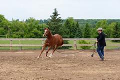 JBC_4996.jpg (Jim Babbage) Tags: krahc horseshow appaloosa horses 2018