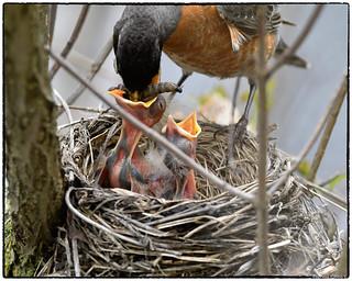 Feeding series (2/9 images)