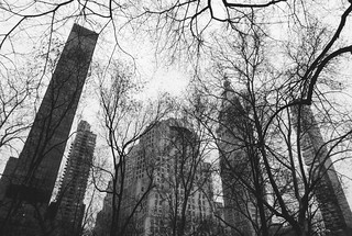 NYC Arch & Trees #13
