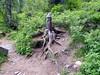 Rifugio Toesca - (17-06-18) 21 (Christian Perfumo) Tags: italia piemonte torino valdisusa natura escursione primavera primavera2018 2018 allaperto