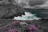 Waves (khan.Nirrep.Photo) Tags: bretagne breizh bleu blue rocks rochers sky sea seascape finistère falaise flower fleur presquile paysage vagues water waves bw canon ciel canon6d ef1635mmf28liiuusm flickrunitedaward