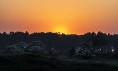 20180514-2110-42 (Don Oppedijk) Tags: amsterdamsewaterleidingduinen awd sunset cffaa hawthorn meidoorn