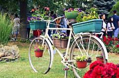 Old bicycle in school yard (marijanaivljanin993) Tags: garden backyard old bike nature day focus camera nikon d3200 srbija serbia serbien aleksandrovac