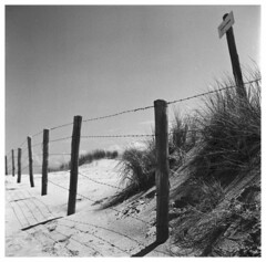 Dunetop (Mark Dries) Tags: markguitarphoto markdries yashicamat lumaxar 3580 tlr orangefilter ilfordfp4 r09 900 125 film filmphotography mediumformat 6x6 dune fence