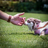 Patience (3537) with Lila (jim fleckenstein) Tags: dog perro sniff touch grass outdoors candid animal chihuahua friendship trust canon nature 70d eos dof blur depthoffield inu cane kukur hund hond