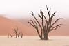 Granfather and family (Paco Conesa) Tags: namibia sossusvlei acacias desert fog niebla desierto africa sunrise canon pacoconesa