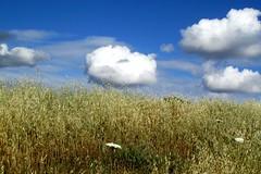 cloud gazing (lualba) Tags: nature coulds grass sky himmel wolken nuvens alentejo portugal