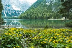 Prager Wildsee-Südtirol-Nikon D500 (Kalbonsai) Tags: nikon d500 1680mm italy südtirol waterscape trees flowers bergen mountains outdootphotography natur