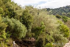 Totaranui- Abel Tasman National Park, Golden Bay (flyingkiwigirl) Tags: abeltasman bird camp deer doc fernbird goldenbay kereru nationalpark pukeko totaranui weka whiteheron