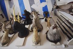 Paris - No 6 (• CHRISTIAN •) Tags: paris france musée museum chasse nature trophées trophy taxidermie grandangle wideangle
