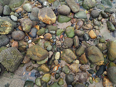 Rocky (Grazerin/Dorli Burge) Tags: malibu malibulagoonstatepark rock tidepool beach color water texture elements