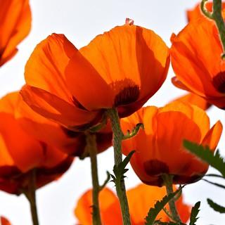 flower's bottom
