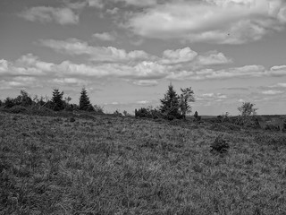 Black Forest view (3)