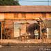 Benin still life