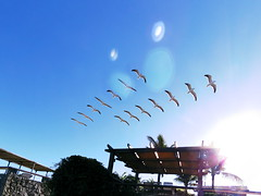 Par de gaivotas (Márcio Vinícius Pinheiro) Tags: larusdominicanus gaivotão gaivota gull seagull kelpgull dominicangull southernblackbackedgull karoro capegull vôo flying stilltimelapse timelapse céu sky sol sun bird pássaro búzios rj seaside natureza nature