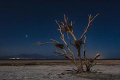 Dead Tree At The Salton Sea (slworking2) Tags: saltonsea lake tree birds birdsnest nest desert california night sky playa