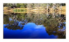 Which way is up? (Greenstone Girl) Tags: trees nativeforest dam billabong birds green blue historichouse fff photowalk barebranches reflections water
