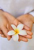 Stock Images (perfectionistreviews) Tags: color vertical outdoors caucasian female plumeria bloom flower hand holding onepersononly 3035years midadult midadultwoman closeup bodypart frangipani hawaii maui photograph youngadult lifestylesandart