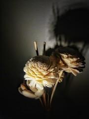 flores e sombra (jakza - Jaque Zattera) Tags: artesanato madeira flores arranjo luz sombra deçicadeza