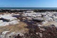 Sodden seaweed in stagnant pools at an oceanfront. (Tim Kiser) Tags: 2017 20170413 april april2017 atlanticocean atlanticoceanlandscape florida floridakeys floridakeyslandscape floridalandscape img9211 monroecounty monroecountyflorida oldbahiahondabridge overseashighway scoutkey scoutkeylandscape spanishharborkey spanishharborkeylandscape spanishharborkeys spanishharborkeyslandscape us1 ushighway1 usroute1 westsummerlandkey westsummerlandkeylandscape algae coastlandscape coastallandscape coastlinelandscape dirtywater grody landscape marinealgae mostlysunny ocean oceanlandscape roadsidepark seascape seaweed seaweedlandscape slabs southflorida southernflorida stagnantwater standingwater sunnylandscape tidalpools tidepools tropicallandscape waterstagnation waterlogged waterloggedseaweed whiterocks