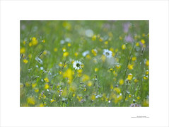 Los paisajes mínimos (E. Pardo) Tags: paisajesmínimos colores colors colours farben flores flowers blumen luz licht light pradera wiese meadow steiermark austria