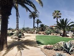 Del Mar, CA (- Adam Reeder -) Tags: california ca united states west coast pacific san diego wwwkk6gpvnet kk6gpv adam reeder adamreeder areed145 patio parkbench y2018 m05 d05 lat330 lon1170 eden gardens solana beach photo jpg apple iphone x del mar studiocouch stonewall peacock lakeside pillow barrow fountain golfcart garden car