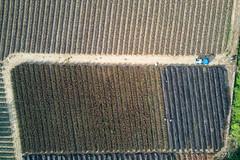 鳳梨田|嘉義事 (里卡豆) Tags: 嘉義市 臺灣省 台灣 tw mavicair dji 大疆 空拍機 mavic air drone taiwan