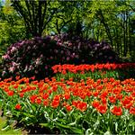 Tulip Garden thumbnail