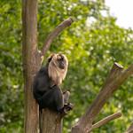 Serengeti Park thumbnail
