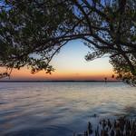 Under the Mangrove Tree thumbnail