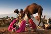 Pushkar Mela. Rajasthan (Tito Dalmau) Tags: women camels fair mela pushkar rajasthan india