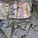 Rockford Limestone over Maury Shale (Lower Mississippian; Burkesville West Rt. 90 roadcut, Kentucky, USA) 3