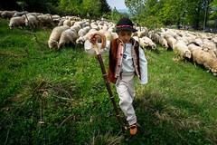 Redyk w Koniakowie / Sheep parade (PolandMFA) Tags: redyk sheep parade pasterstwo shepherding tradycja tradition beskidy polska góry mountains
