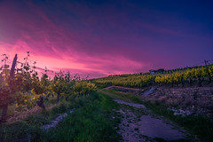 Hessigheim Germany (JasyZ) Tags: germany veinarbour vein sony zeiss 1635 landscape sunset light magenta a7ii nature sunlight contrast
