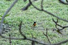 Bird (ArielTnT) Tags: fauna switzerland colours naturalistic wild bird nature