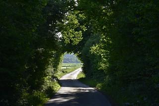 Bio-Tunnel; Bergenhusen, Stapelholm (40)