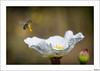 De blanco papel (V- strom) Tags: nikon nikon105mm nikond700 vstrom texturas textures textura blanco white amarillo yelow polen poland abeja bee macros macrophotography macrofotografía macro macrodeflora macrodefauna primavera spring springtime verde green polinización pollination bokeh insecto insect flor flower luz light jara