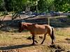 På väg… (Patrick Strandberg) Tags: sweden östergötland bergagård benji icelandichorse islandshäst horse häst iphone iphonex