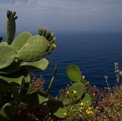 Lo Zingaro, Sicily (mariasara.dimaggio) Tags: sea sicily lo zingaro scopello flora fiori cesti mare