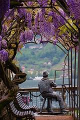 La leggenda del pittore che dipingeva tele invisibili. (stefano.chiarato) Tags: pittore orta piemonte italy glicine fiori lago pentax pentaxlife pentaxk70