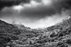Close to the Clouds... (Ody on the mount) Tags: anlässe ardèche drama em5ii fototour frankreich mzuiko6028 omd olympus urlaub wald wolken bw clouds monochrome sw valgorge auvergnerhônealpes fr