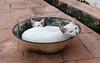 Stray cat - Jonker Walk, Melaka Malaysia (sydbad) Tags: stray cat jonker walk melaka malaysia fujifilm x100f jpeg output standard simulation