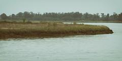 Fraser River (annapolis_rose) Tags: delta ladner greatervancouver fraserriver river